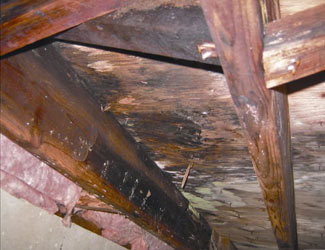 mold and rot in a Idaho Falls crawl space
